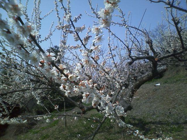 春だね〜!